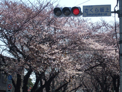 Hanami20120408