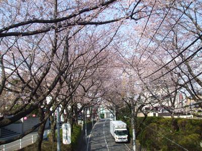 Hanami201204081