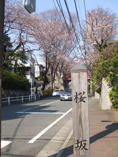 Hanami201204082
