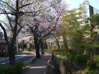 Hanami201204083