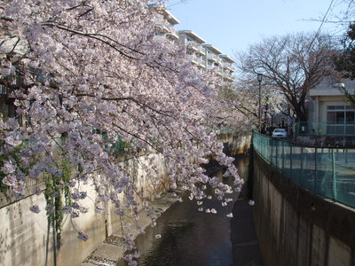 Hanami201204086